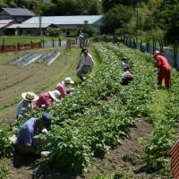 天寿寮 農耕作業